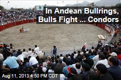 In Andean Bullrings, Bulls Fight ... Condors