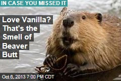 Love Vanilla? That's the Smell of Beaver Butt