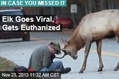Elk Goes Viral, Gets Euthanized