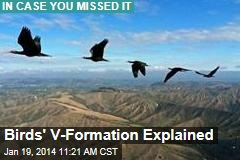 Birds' V-Formation Explained