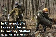 In Chernobyl's Forests, Decay Is Terribly Stalled