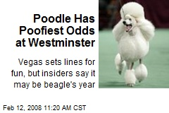 Poodle Has Poofiest Odds at Westminster