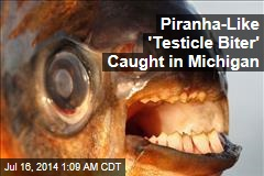 Piranha-Like 'Testicle Biter' Caught in Michigan