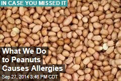 What We Do to Peanuts Causes Allergies