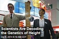 Scientists Are Decoding the Genetics of Height