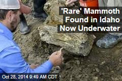 'Rare' Mammoth Found in Idaho Now Underwater