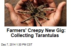 Farmers' Creepy New Gig: Collecting Tarantulas