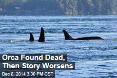 Orca Found Dead, Then Story Worsens