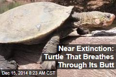 Near Extinction: Turtle That Breathes Through Its Butt