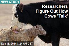 Researchers Figure Out How Cows 'Talk'