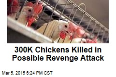 300K Chickens Killed in Possible Revenge Attack