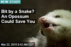 Bit by a Snake? An Opossum Could Save You