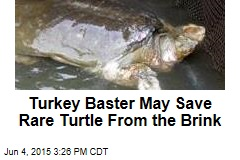 Turkey Baster May Save Rare Turtle From the Brink
