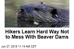 Hikers Learn Hard Way Not to Mess With Beaver Dams