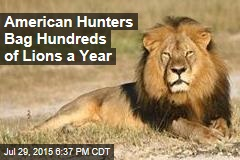 American Hunters Bag Hundreds of Lions a Year
