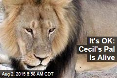 It's OK: Cecil's Pal Is Alive