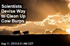 Scientists Devise Way to Clean Up Cow Burps