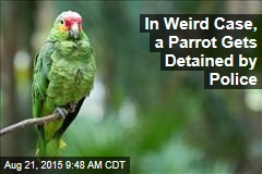 In Weird Case, a Parrot Gets Detained by Police