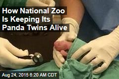 How National Zoo Is Keeping Its Panda Twins Alive