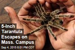 5-Inch Tarantula Escapes on Mass. Campus