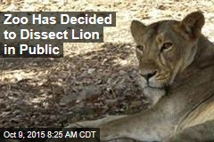 Zoo Has Decided to Dissect Lion in Public