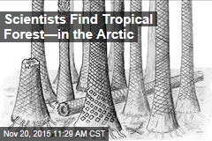 Scientists Find Tropical Forest—in the Arctic