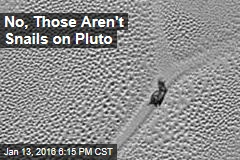 No, Those Aren't Snails on Pluto