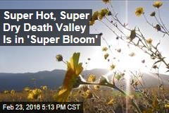 Super Hot, Super Dry Death Valley Is in 'Super Bloom'