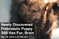 Newly Discovered Prehistoric Puppy Still Has Fur, Brain