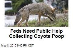 Feds Need Public Help Collecting Coyote Poop