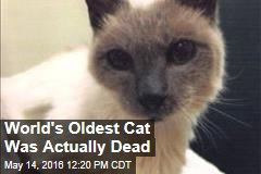 World's Oldest Cat Was Actually Dead