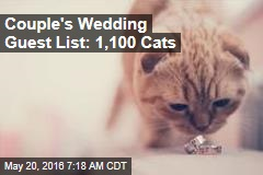Couple's Wedding Guest List: 1,100 Cats