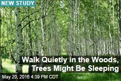 Walk Quietly in the Woods, Trees Might Be Sleeping
