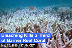 Bleaching Kills a Third of Barrier Reef Coral