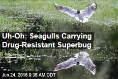 Uh Oh: Seagulls Carrying Drug-Resistant Superbug