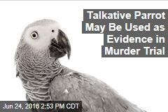 Talkative Parrot May Be Used as Evidence in Murder Trial
