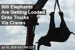 500 Elephants Are Getting Loaded Onto Trucks Via Cranes