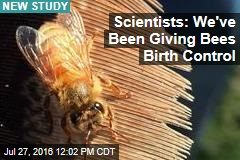 Scientists: We've Been Giving Bees Birth Control