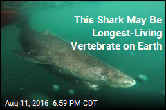 Meet the Shark That May Live for 500 Years