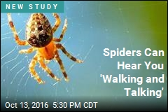 Spiders Can Hear You 'Walking and Talking'