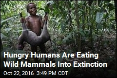 Hungry Humans Are Eating Wild Mammals Into Extinction