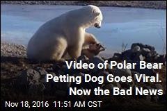Viral Video of Polar Bear Petting Dog Has Unfortunate Update