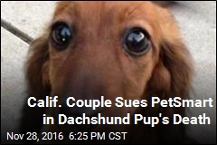 Calif. Couple Sues PetSmart in Dachshund Pup's Death