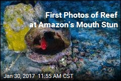 First Photos of Reef at Amazon's Mouth Stun