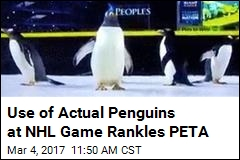 Use of Actual Penguins at NHL Game Rankles PETA