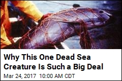 Why This One Dead Sea Creature Is Such a Big Deal