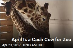 April Is a Cash Cow for Zoo
