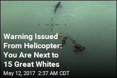 Helicopter Crew Warns Paddle-Boarders About Sharks