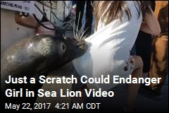 After Crazy Sea Lion Video, Don't Blame the Sea Lion