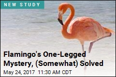 Flamingo's One-Legged Mystery, (Somewhat) Solved